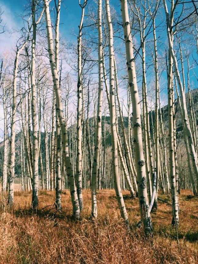 birch on birch